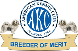 AKC Havanese Breeder of Merit