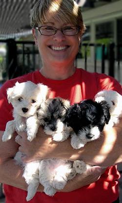 1 AKC Havanese Puppies Arizona Breeder | R'Gang Havanese